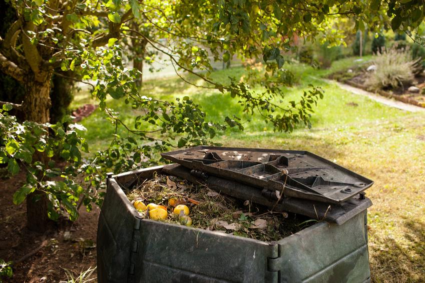 Kompostwürmer kaufen für einen Komposter im Freien