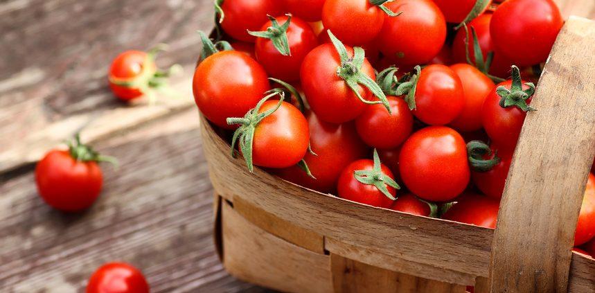 Tomatendünger Wurmhumus